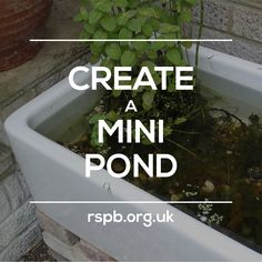 Water brings a magical quality to your garden, and is the key to life for so many creatures. #homesfornature