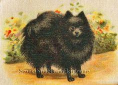 Black Pomeranian ~ Dogs ~ Counted X Cross Stitch Pattern #StoneyKnobFarmHeirlooms #CountedCrossStitch