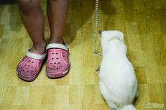 Claw Cat: Tips bagaimana caranya agar kucing suka di rumah (baru) http://clawcat.blogspot.com/2013/10/Tips-bagaimana-caranya-agar-kucing-angora-suka-di-rumah-baru.html