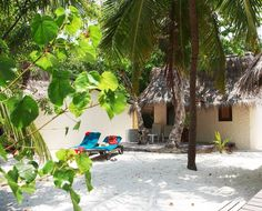 Hotel Kuredu Island Resort, recenze hotelu, dovolená a zájezdy do tohoto hotelu na Invia.cz Maldives Accommodation, Kuredu Island, Island Resort, Bungalow, Tours, Patio, Garden, Outdoor Decor, Plants