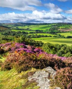 The open countryside of Northumberland.