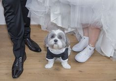 www.Trouwgeheimen.nl/trouwfotos-met-hond/ Dogs, Animals, Animales, Animaux, Pet Dogs, Doggies, Animal, Animais