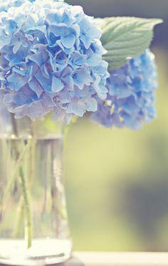oh hydrangeas, how i love thee.