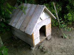 doghouse heart