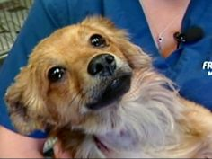 California Dog Burned by Explosive Reunited With Owned
