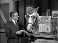 Mister Ed: The Complete Third Season 60s Tv Shows, Old Shows, Classic Tv, Classic Films, Mister Ed, Farm Images, History Timeline, Family Show, Childhood Days