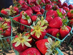Boggy Creek Farm currently has pick-your-own organic strawberries Wed and Sat, 8-1(Austin)