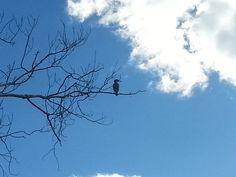 Vigilando desde lo alto, en el Clot Borriana. No te puedes fiar #mejoraygana