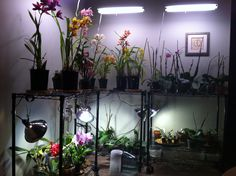 My orchid collection