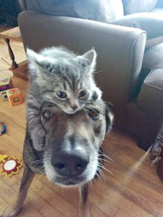 Shared by shopforpaws.com. Love a good #cat photobomb...Not sure the #dog loves it:)