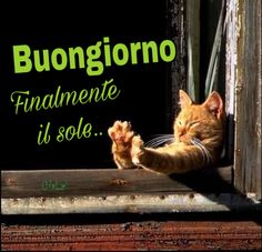 Immagini romantiche di Invia o Condividi via Whatsapp | Titolo 8667 Good Morning World, Good Morning Good Night, Italian Memes, Crazy Cats, Vignettes, Animals And Pets, Humor, Smartphone, Women's Fashion