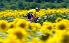Lance Armstrong and those famous French sunflowers