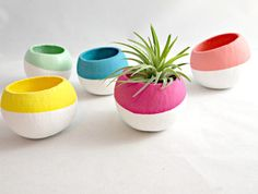 Mini Air Plant Pods - Choose Your Colors (Air Plant Not Included)