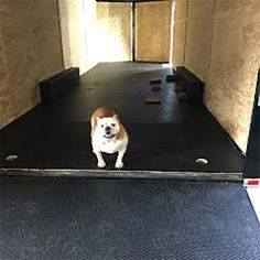 We love how quick BLT products can be installed. Kenny installed the BLT Trailer flooring in his race trailer so he and his dog could be off to the races in no time at all. Garage Floor Mats, Garage Flooring, Buddy Love, Cool Garages, Floors And More, Dog Photos, Cute Dogs, Pup, Home Improvement