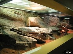 Terrarium désertique des agames