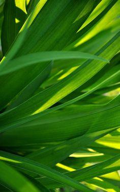'Grüne Blätter' von Claudia Burlager bei artflakes.com als Poster oder Kunstdruck $20.79
