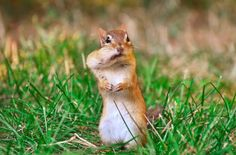"""""""What nut?"""