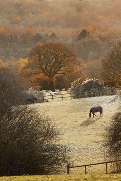 jerez72 El frio en el prado…