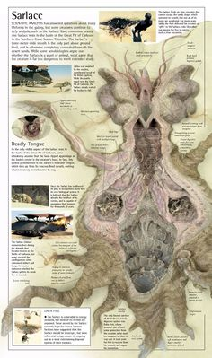 Anatomy of the sarlacc pit