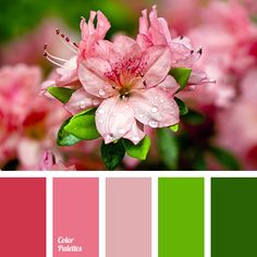 bright scarlet, brown, burgundy, chocolate, color match for décor, deep green, dirty green, green, light green, pastel pink, pink, Red Color Palettes, red-pink, shades of red-pink, swamp brown, swamp green, wine color.