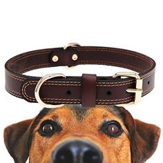 Genuine Leather Dog Collar With Alloy Buckle and Double D Rings Small Brown >>> You can find more details by visiting the image link.