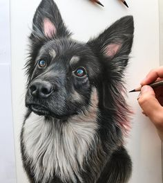 "3,999 Likes, 82 Comments - Claire Milligan (@clairemilliganartist) on Instagram: ""'Sasha' the lovely German Shepherd mix. She has the most gorgeous array of colours in her fur and I…"""