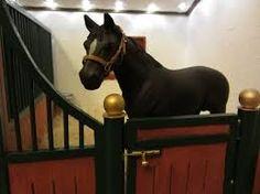 Schelich horse in stall