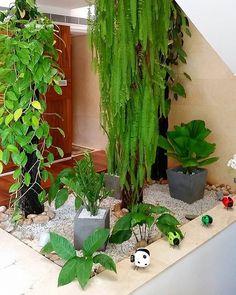 #12M Calas, planta del dinero, helechos, malangas, palma totuma y serpentarias, perfectas para #JardinesInternos. Buen día!⛅ ▫ GramasdeOcc@gmail.com ▫ #Maracaibo #SanFrancisco #CiudadDePanamá |Fotografía por LJU. Locación: La Lago-Mcbo.| ▫ #paisajismo #pedreríamonumental #accesorios  #jardinesEspectaculares #arquitectura #portafolio #paisajes #jardines #diseño #decor #instalacion #renovacion #jardinesmodernos #arquilovers #casasmodernas #homestyle #instadecor #indoors #garden #l...