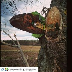 #Repost @geocaching_emperor ● ● ● Keep tagging us and we repost your picture ● ● ● Really nice tradicional cache found in the middle of nowhere :) #geocaching #geocache #gc #opencaching #oc #tradicional #cache #geocoin #foundit #travelbug #ftf #tftc #tree #terrain #gowro #wroclaw #nature @geocache_nation #f4f #followme