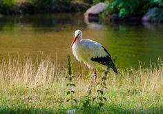 Stork by Mathias Tapio on 500px