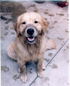 Hunter, reporting all mudholes safe and secure