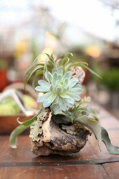 Blog Multiflora: Vasos Naturais - Parte 1
