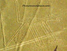 Dog: Humorously referred to as the oldest dog in the world, the Nazca dog is one of the top 10 Nazca figures. It is approximately 164 feet long.
