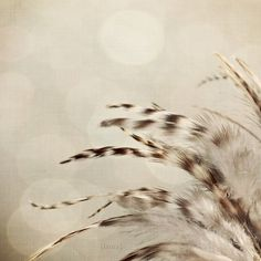 """Feather Photo - Dreamy Home Decor -  Baby Nursery -  Home Decor - (Brown, Beige, and Ivory) - Original Fine Art Photo - """"Ethereal Feathers"""""""