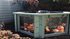 Lily Clear View Garden Aquarium - Raised Wooden Pond/Water Feature in Seagrass Green (Video) Outdoor Fish Ponds, Fish Ponds Backyard, Patio Pond, Diy Pond, Outdoor Fish Tank, Indoor Pond, Indoor Water Garden, Garden Ponds, Koi Ponds
