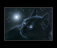Black Cat Moonlight Reflections Print by I Garmashova | eBay