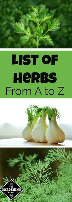 Complete list of herbs for your garden. If you are looking for something new to plant, save this guide to herbs.