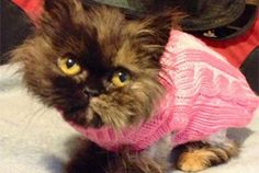 Have you met Freida the throw away kitty?