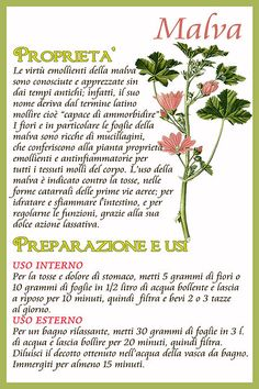 Il Calendario dell'Orto | Fiori felix Holistic Remedies, Natural Remedies, Natural Life, Natural Health, Magic Herbs, Plants Are Friends, Green Life, Medicinal Plants, Herbal Medicine