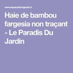 Haie de bambou fargesia non traçant - Le Paradis Du Jardin