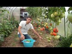 Сидераты. Посев под томаты. - YouTube