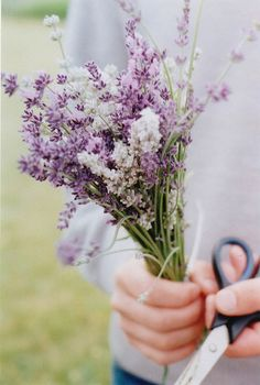 lavender + baby's breath for bmaid bouquet. wrap in either burlap or white lace  centerpieces?
