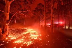 Burning embers cover the ground as firefighters (back R) battle against bushfires around the town of Nowra in the Australian state of New South Wales on December Sussex Inlet, Irwin Family, Melbourne, Sydney, Extreme Weather, Extreme Heat, Holiday Destinations, The Guardian, Climate Change