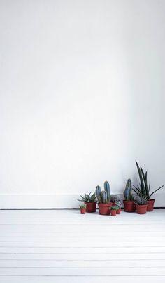 Gezellige cactussen
