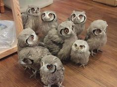 Who, Who, Who let the owls out!