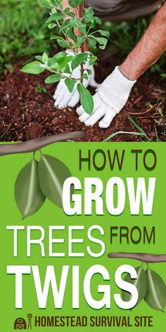 In this article, you'll learn step by step how to grow a tree from a twig. You'll just need a few things: a tree branch, a plastic bottle, a knife, and a hammer. #homestead #homesteading #gardening #growingtrees #plantingtrees
