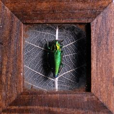 Jewel Beetle Curio Trinket Box