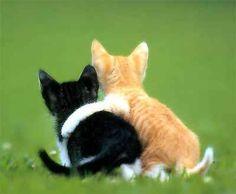 Best friend kitties! <3