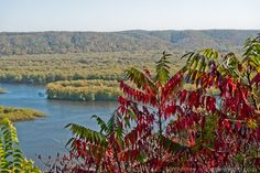 Sumac in early fall. Photo taken from Pike's Peak State Park in Iowa looking across the Mississippi toward Wisconsin.