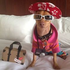 Tuna was fully prepared for a doggy vacay. | The 23 Best Dressed Animals Of 2014
